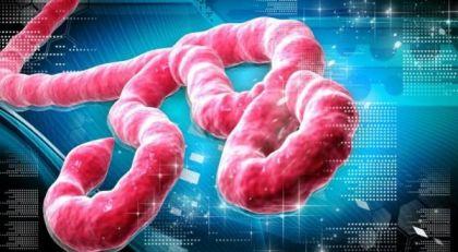 ebola_in_europe